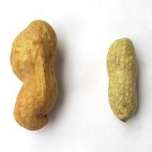 大きさの比較
